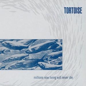 tortoise-640x640